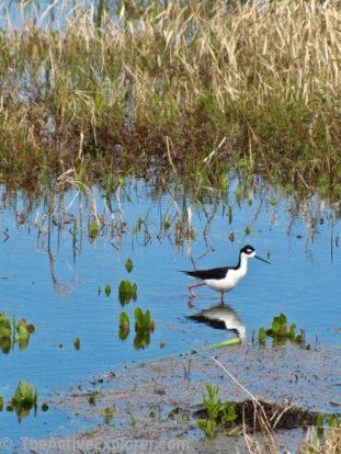 Birding in Myakka