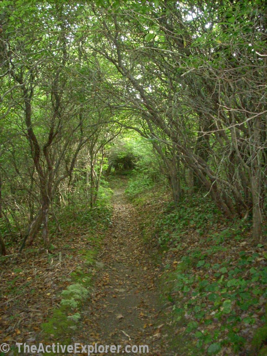 The Long Green Tunnel