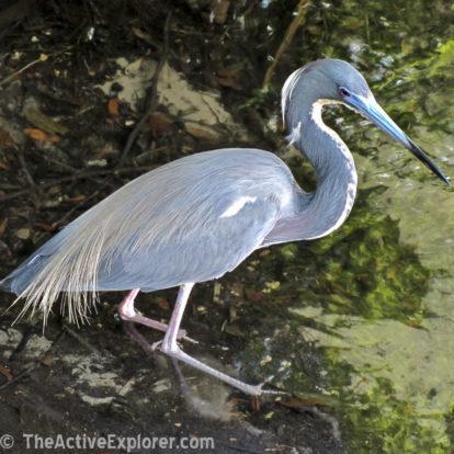 Bird Fishing at Leu Gardens