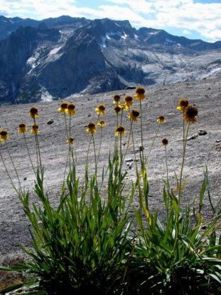 Flowers and Peaks