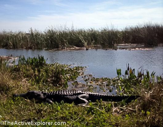 Orlando Wetlands Park-2