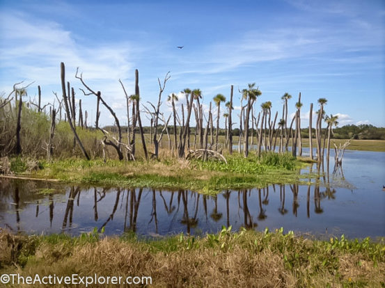 Orlando Wetlands Park-3