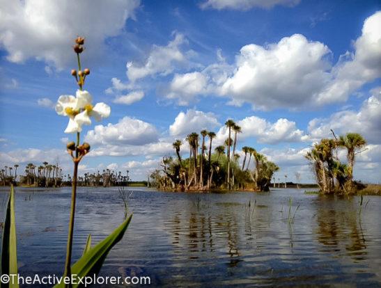 Orlando Wetlands Park-5