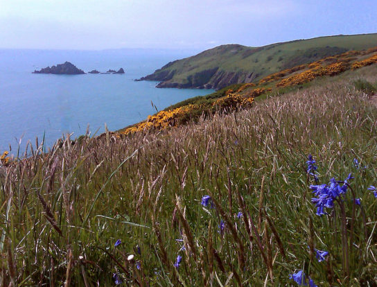 Flowers on the South West Coastal Path
