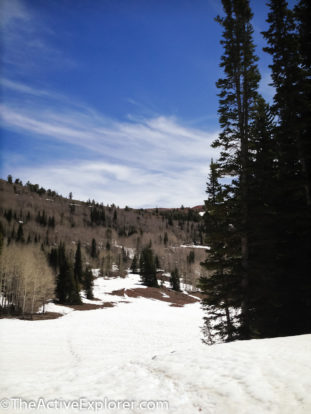 The Snowy Trail