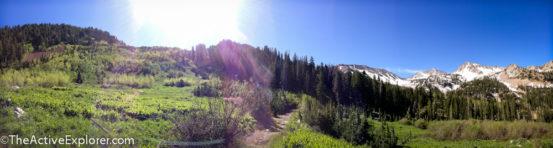 Meadows along the White Pine Trail