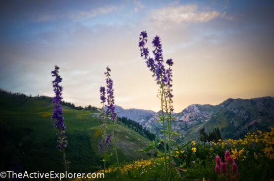 Alta Ski Area Sunset