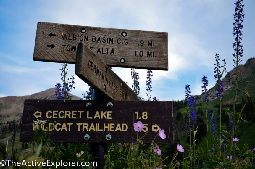 Sign and wildflowers at Alta Ski Area