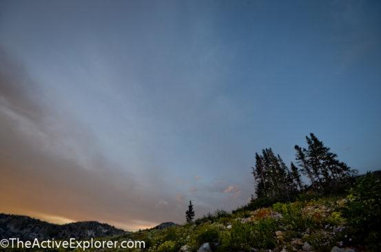 Night and WIldflowers at Alta Ski Area