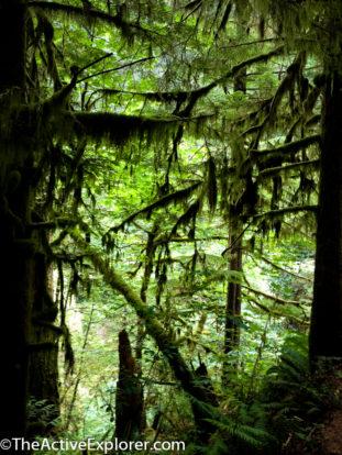 Triple Falls Trail Oregon