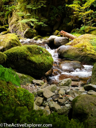 Mossy stones on Oneonta Creek
