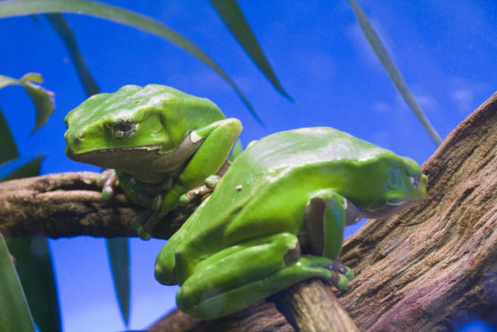 Frogs at Terra Natura