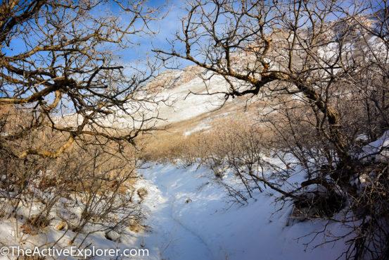 Red Butte Gardens Loop Trail 1