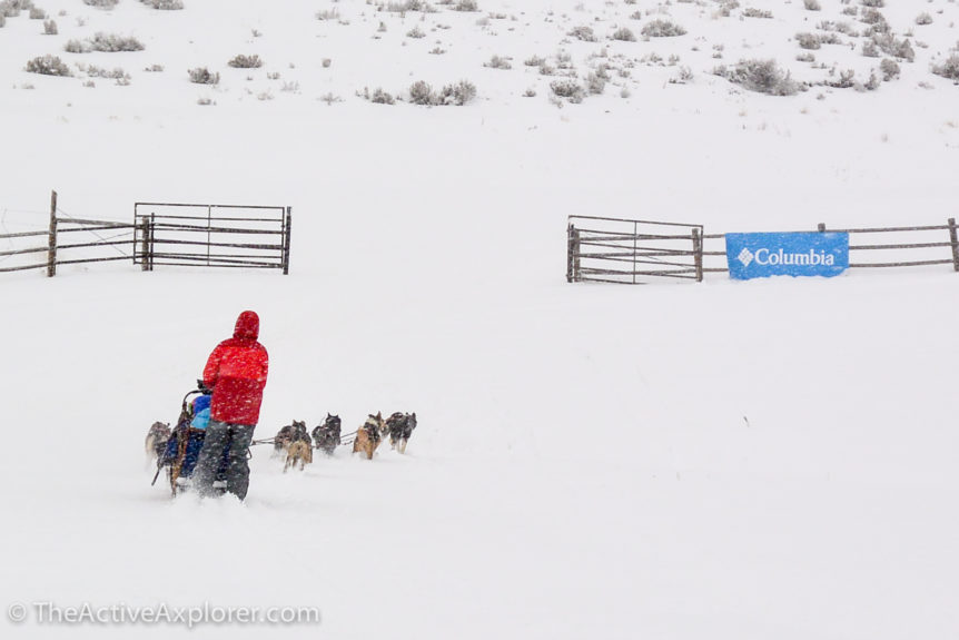 Dog Sled Park City