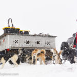 Sled Dogs Playing in Utah