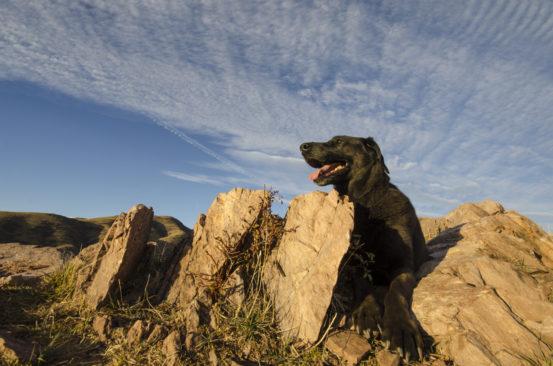 LeeLoo the Dog
